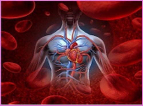 очистить организм от шлаков и токсинов