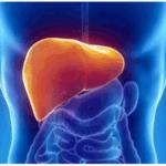 Какие внешние проявления «говорят» о функциональной слабости органов жкт?
