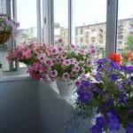 Озеленение балкона, террасы, лоджии. Выбор растений