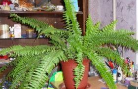 Комнатные растения очищающие воздух в квартире