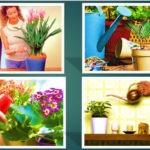 Как ухаживать за комнатными растениями 3 простых совета