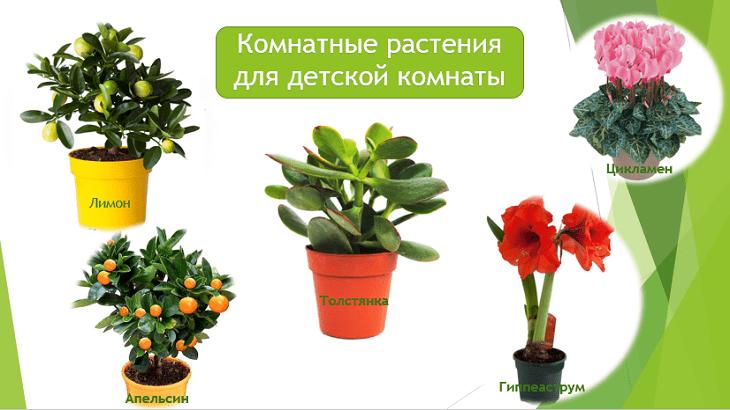 полезные комнатные растения для детской комнаты