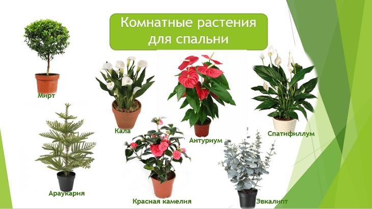 полезные комнатные растения для спальни