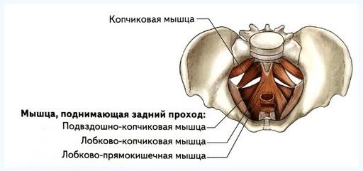 заболевания половых органов