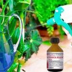 Уход за комнатными растениями  с помощью перекиси водорода