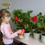 Полив комнатных растений. Что нужно знать начинающим цветоводам
