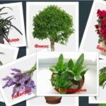 7 комнатных растений для хорошего сна. Полезные советы