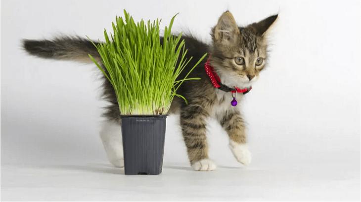 Ядовитые для кошек растения, как комнатные, так и садовые