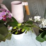 Что сделать чтобы орхидея зацвела?